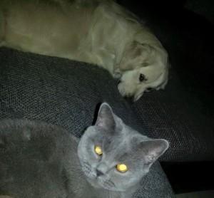 Tom bloggt seinen alltag hund katze