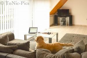 Wohnzimmer umbau 1 (4 von 6)