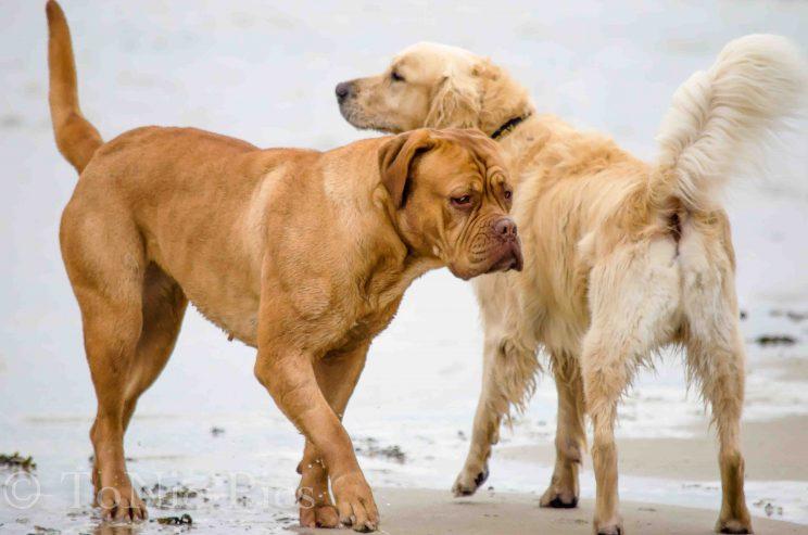 tom bloggt seinen alltag norddeich urlaub hunde hundeurlaub hundestrand strand