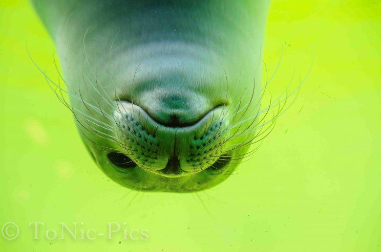 tom bloggt seinen alltag norddeich urlaub hunde hundeurlaub hundestrand strand robben robbenstation